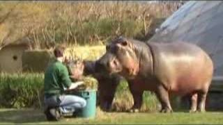 Download Hungry hungry hippos Video