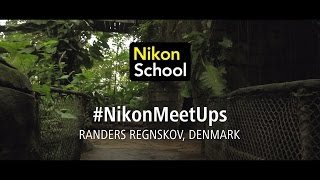 Download #NikonMeetUps: Wildlife photography, Denmark, March 2017 Video