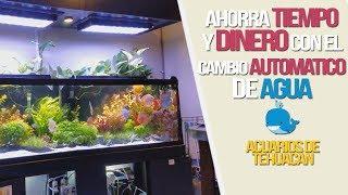 Download YA NO MAS CAMBIOS DE AGUA EN EL ACUARIO | ACUARIOS DE TEHUACAN Video