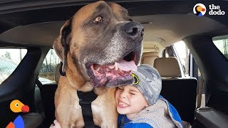 Download HUGE Dog Learns To Walk Again So He Can Be With His Favorite Boy - GRIZZY | The Dodo Video