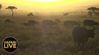 Download safariLIVE - Sunrise Safari - September 9, 2018 Video