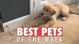 Download Best Pets of the Week | October 2018 Week 1 Video