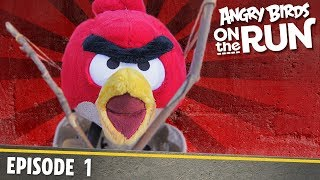 Download Angry Birds on The Run | On The Other Side - S1 Ep1 Video
