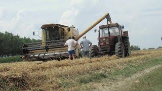 Download Trebbiatura Grano Duro 2015 | New Holland TX 34 | Fiatagri 110/90 DT | Wheat Harvesting 2015 Video