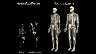Download Origins of Genus Homo: What Who When Where?; Early Body Form; Life History Patterns Video