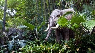 Download JUNGLE CRUISE at Disneyland (FULL RIDE) POV - GREAT QUALITY (1080p HD) Video