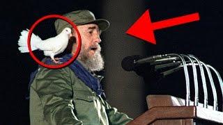Download Fidel Castro Curiosidades de su vida Video