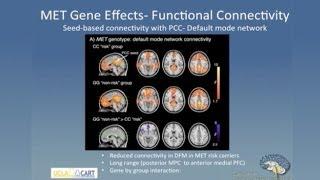 Download Linking Genes Brain and Behavior in Autism Spectrum Disorder Video