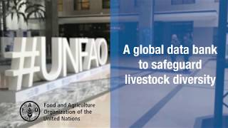 Download FAO Domestic Animal Diversity Information System (DAD-IS) Video