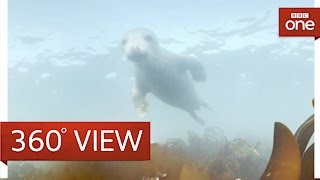 Download Diving with grey seals in 360° - The One Show - BBC One Video