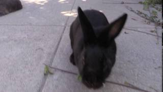 Download Bunny Crush Video
