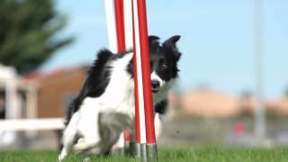 Download Royal Canin AGILITY 4100 POS CZ Video