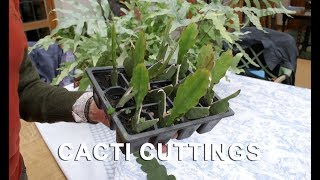 Download Get Gardening: Get Your Fill of an Epiphyllum (Cacti cuttings) Video