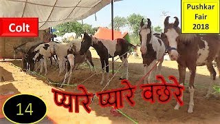 Sonepur Mela : Asia's biggest cattle fair Free Download