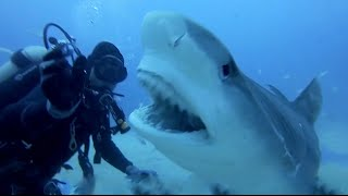 Download SCARY SHARK ATTACKS captured by GoPros compilation Vol.1 Video