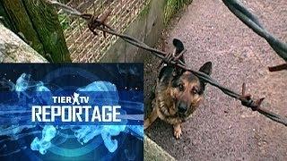 Download Reportage: Hundequäler Video