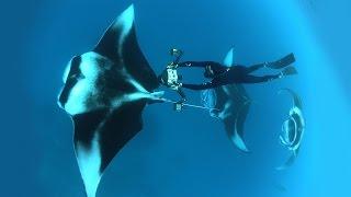 Download Dive into an ocean photographer's world | Thomas Peschak Video