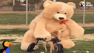 Download Dog Meets Favorite Life Sized Toy | The Dodo Video