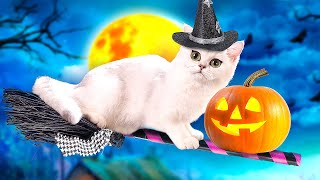 Download CATS TRICKS and TREATS TALES Video