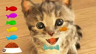 Download Play Fun Pet Care Kids Game -Little Kitten My Favorite Cat - Fun Cute Kitten For Children & Toddlers Video