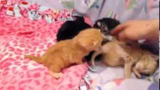 Download Tiny Kittens Shelly visits after the missing babies scare Video