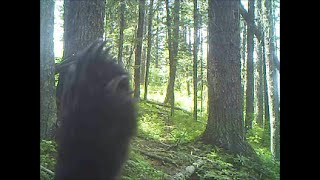Download Trail Camera Clips Video
