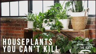 Download Houseplants You Can't Kill | Gardening & Outdoor Living | Better Homes & Gardens Video