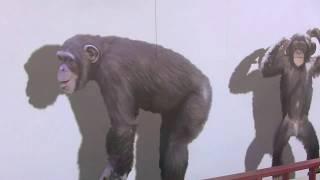 Download リキの指を噛んだ母カズミ son's discipline chews Chimpanzee Video