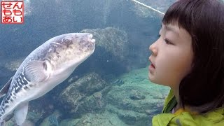Download アクアワールド大洗 Aqua World Oarai Aquarium Video
