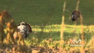 Download Extreme Close-Up Alabama Turkey Hunt Video
