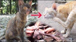 Download 猫的ビフォーアフター【パンダ顔の小汚い猫を少女が洗う】 Video