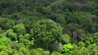 Download Amazon: The lungs of our planet by BBC Video