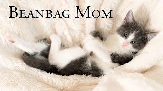 Download Kittens' Beanbag Mom Video