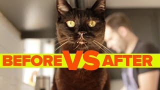 Download Before Vs. After Getting A Cat Video