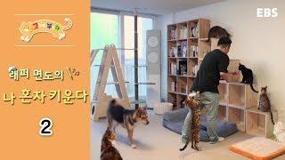 Download 고양이를 부탁해 - 래퍼 면도의 나 혼자 키운다 #002 Video