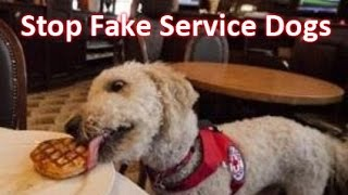 Download Help Put An End To Fake Service Dogs! Video