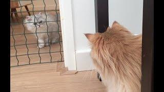 Download INTRODUCING TWO CATS - Smoothie meeting Milkshake Video