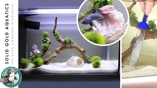 Download How I Do Water Changes for My Betta Fish Video