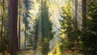 Download Peaceful music, Relaxing music, Instrumental music ″Through the Trees″ Tim Janis Video