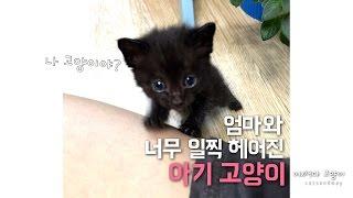 Download 새끼고양이의 엄마가 되었다 Raising a kitten Video