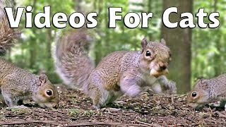Download Videos & Movies for Cats to Watch Squirrels - Squirrel World Video