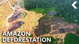 Download What Ever Happened To Saving The Rainforest? Video
