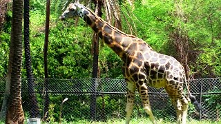 Download NEHRU ZOO HYDERABAD - HD Video - Complete Coverage Video