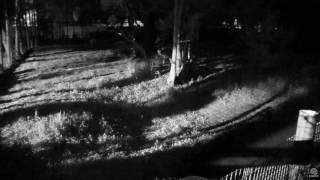 Download Seth hunting raccoons Video