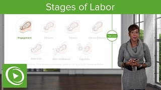 Download Stages of Labor: Stages 1, 2 & 3 of Normal Labor – Obstetrics | Lecturio Video