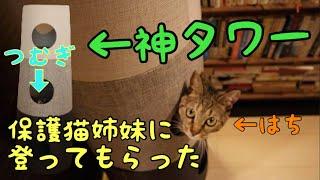 Download 神猫タワー NECOTA COUTATTA [保護猫姉妹] Video
