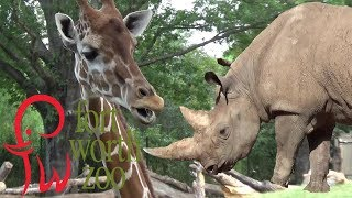 Download Fort Worth Zoo Tour & Review with The Legend Video