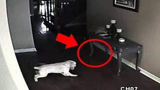 Download 5 Dogs That Saw Something Their Owners Couldn't See : Ghosts, ESP, & Paranormal Video