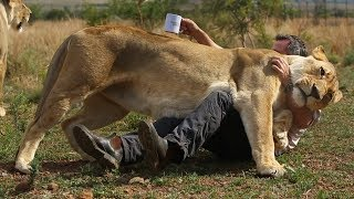 Download Lions vs Coffee! | The Lion Whisperer Video
