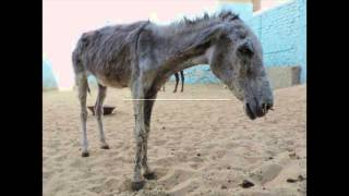 Download Happy Hooves Rescue Video